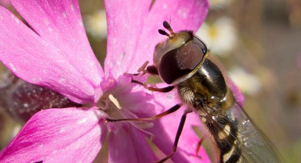 Perfect Pollinators